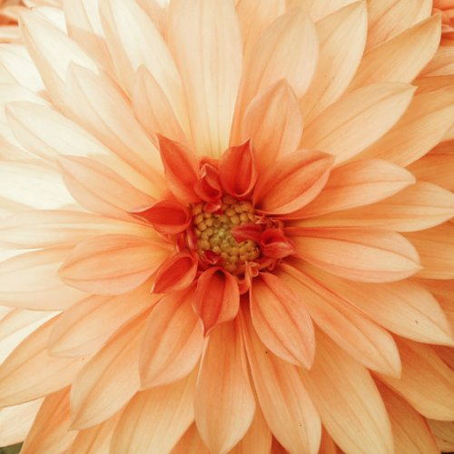 How To Take Interesting iPhone Photos By Capturing Small Details