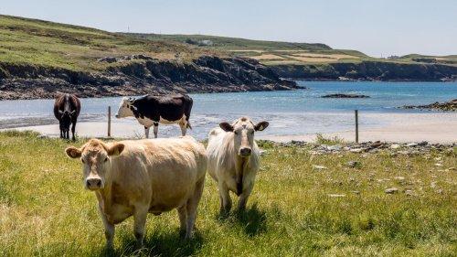 Irish Farming cover image