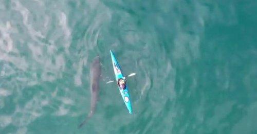 Footage shows huge 20ft shark circling Irish kayaker off Cork coast