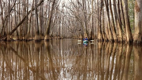 SC's national park: A joyful adventure through cathedral trees, hearing songbirds call