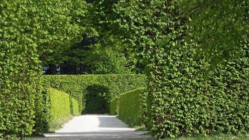 7 лучших вечнозеленых растений для сада: название, описание и фото