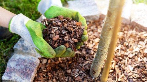 7 причин мульчировать сад (если вы все еще этого не делаете)