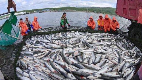 Штрафы за браконьерство возрастут в разы