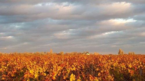 Bordeaux 2020 – the sweet-wine struggle | JancisRobinson.com