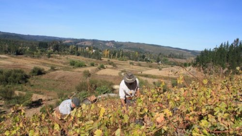 San Rosendo Malbec – Chile's new old thing | JancisRobinson.com
