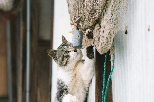 Katzeninsel Aoshima in Japan