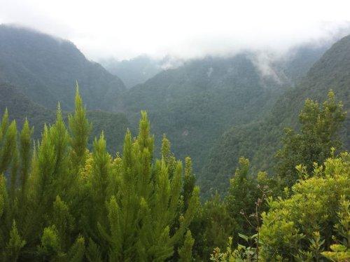 La Palmas Norden: Der Lorbeerwald Los Tilos und die Naturbecken Piscinas de la Fajana
