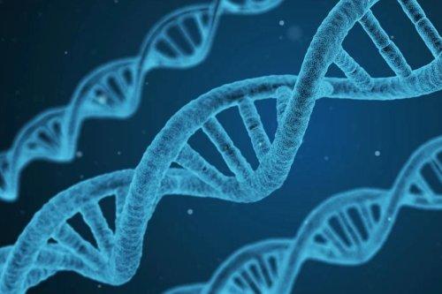 Surprise : les cellules humaines peuvent finalement convertir l'ARN en ADN | Journal du Geek
