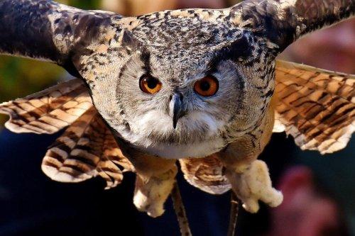 Les oiseaux auraient un sixième sens à base de physique quantique