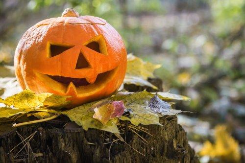 Vacances scolaires 2021 : la Toussaint jusqu'au 8 novembre