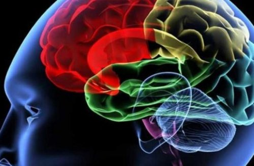 Tel Aviv University reveals brain cancer cure breakthrough
