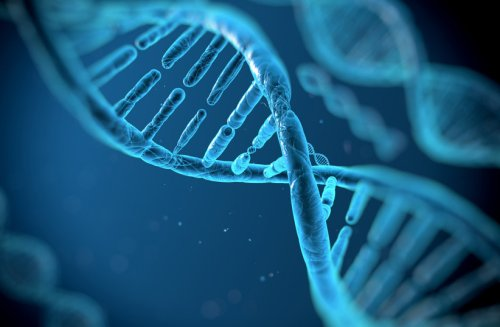 Scientists discover genes directly responsible for obesity