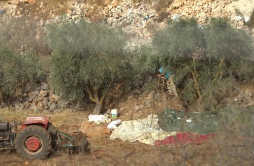 Lebanese farmers allowed into Israel by IDF for olive harvest