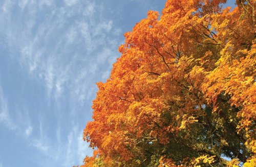 COVID-19, maple trees: Robert Frost's message is still relevant - opinion