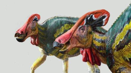 Mexikanische ForscherInnen: Neue Dinosaurierart entdeckt