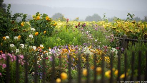 Plädoyer für mehr Unordnung im Garten