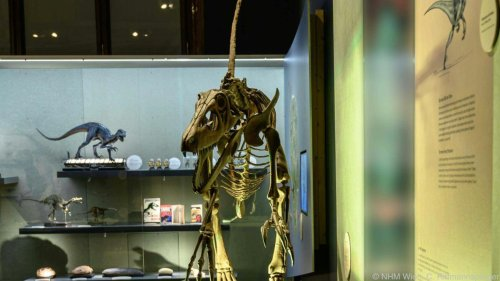 Im Naturhistorischen Museum hat der T. Rex auch Federn