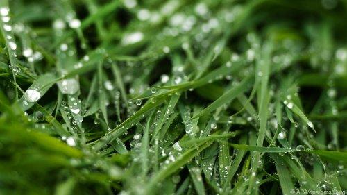 Nach Gewittern sehr nassen Rasen nicht betreten