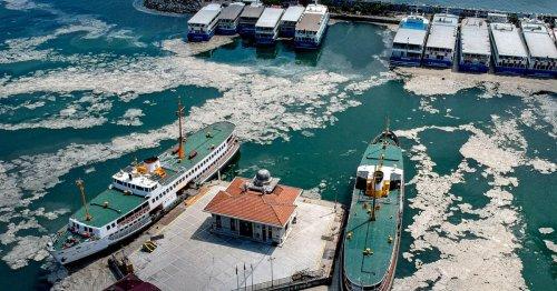 Schleimplage im Marmarameer: Experten fordern rasches Handeln