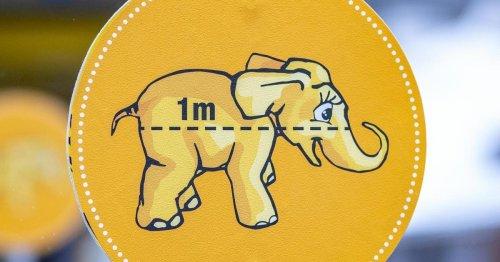 Babyelefant-Infokampagne kostete rund 3,2 Millionen Euro
