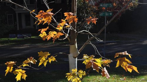 Pining for a new tree? Here's how, where and when to plant one