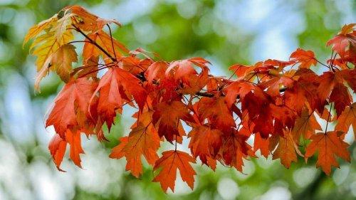 How does Kansas City fare as climate change leads to warmer fall season across the U.S.?