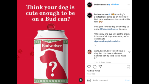 Budweiser looking for a dog to feature on its holiday can. Here's how to submit yours