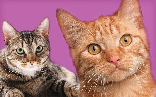 How to Find a Great Cattery by @vitalpetclub - Katzenworld