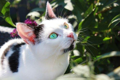 Creating a Pet Safe Garden - Katzenworld