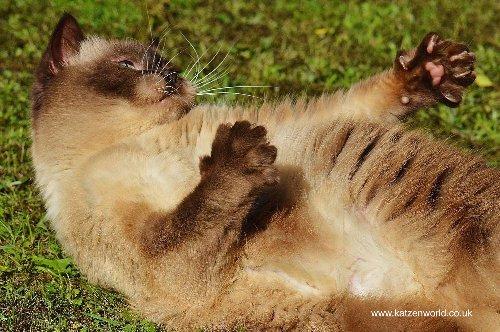 Diabetes and Pets - Katzenworld