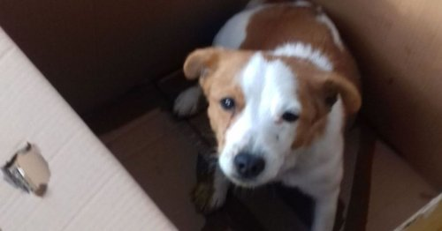 Pregnant Jack Russell and puppies die after being dumped on Ashford driveway