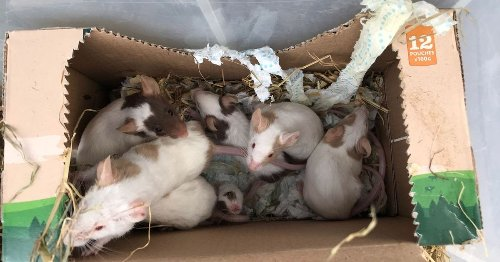 19 mice found dumped in box in Maidstone woodland