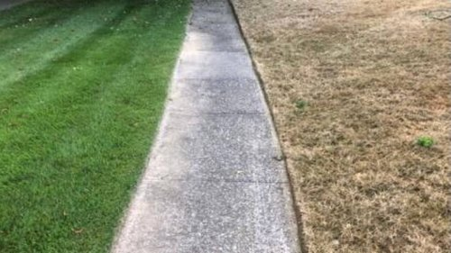 Fall armyworms attacking lawns in Southeast at unprecedented level. What to know
