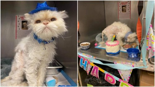 19-year-old cat has birthday party at Ohio rescue center. Then came adoption requests