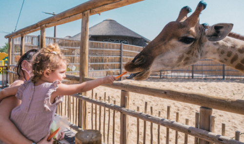 Dubai Safari Park to open for new season on Sept 27