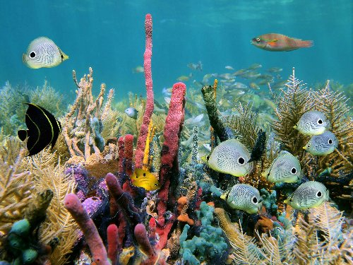 Community project at Expo 2020 to build coral reef for hammour