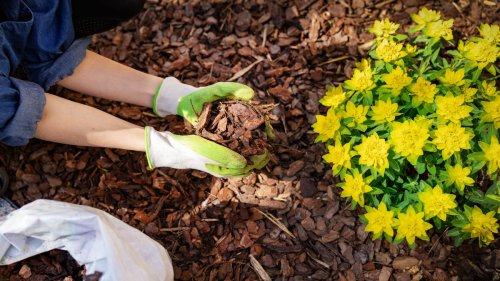 How to Use Mulch in Your Flowerbeds and Garden