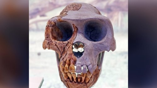 What Fossilized Hand Says About a Human and Chimpanzee Ancestor