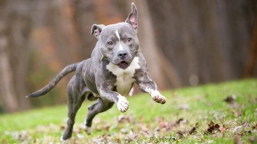 What to Do (and Avoid) When Your Dog Gets the Zoomies