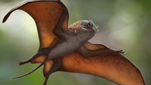Adorable 'Porg' Pterosaur Flapped Above Jurassic China