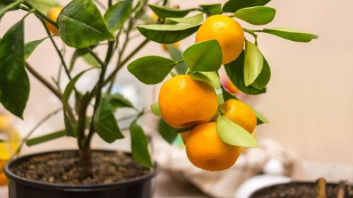 Move These Outdoor Potted Plants Indoors to Survive the Winter