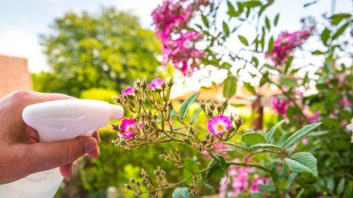 10 Ways You Should Be Using Vinegar in Your Garden