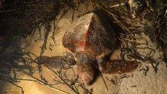 Discover endangered turtles