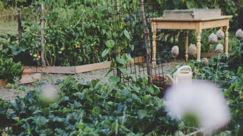 The Easiest Vegetables to Grow for Beginner Gardeners