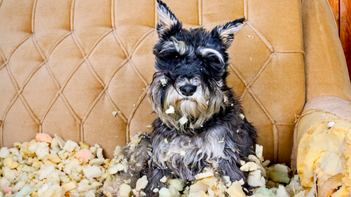 6 Crucial Things To Know About Petcare
