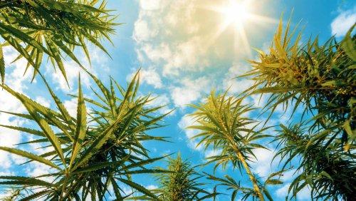 10 Best Marijuana Stocks to Buy for 2021 | Kiplinger