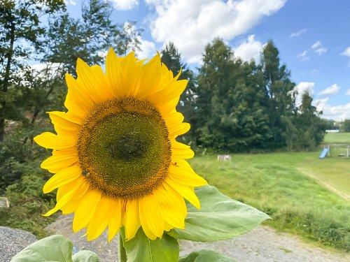 Gärtnern mit Kindern - Tipps und Projektideen, die garantiert gelingen