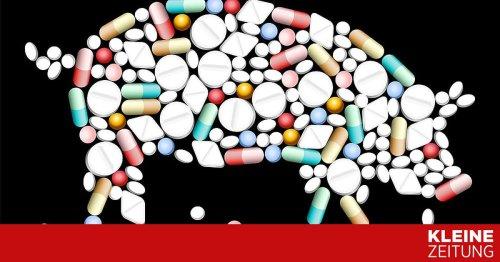 Nach hitzigen Debatten: EU-Parlament lehnt strengere Antibiotika-Regeln für Tiere ab
