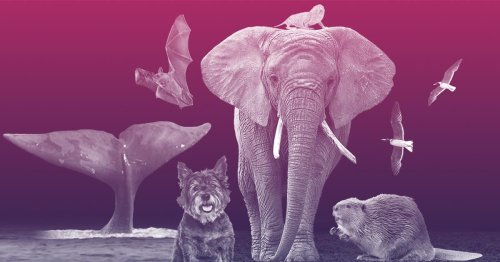 Genetic tricks of the longest-lived animals