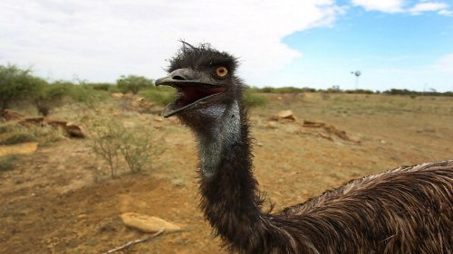 Australia Just Funded A YouTube Comedy About The Great Emu War
